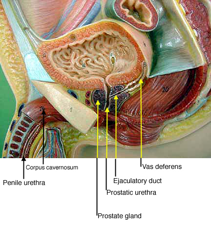 1000+ Images About Human Anatomy & Physiology On Pinterest